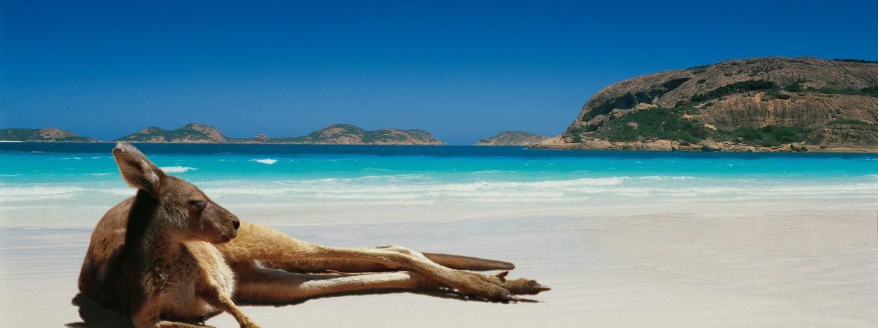 http://www.planete-australie.com/wp-content/uploads/2012/09/Australie-Kangourou-Plage-1250x467.jpg